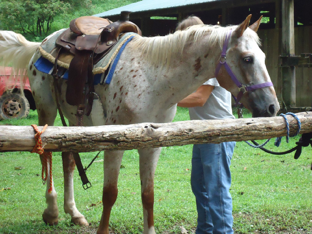 Nantahala Village Riding Stables
